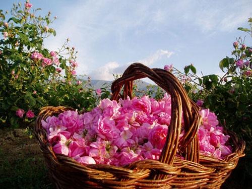 Розовая косметика Био Фреш из Болгарии
